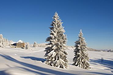 Snow covered trees and hotel Halde, Schauinsland, near Freiburg im Breisgau, Black Forest, Baden-Wuerttemberg, Germany