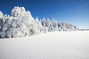 Snow covered trees, Schauinsland, near Freiburg im Breisgau, Black Forest, Baden-Wuerttemberg, Germany