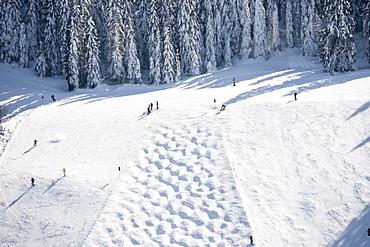 Skiing area, Feldberg, Black Forest, Baden-Wuerttemberg, Germany
