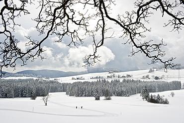 Cross-country skier near Breitnau, near Hinterzarten, Black Forest, Baden-Wuerttemberg, Germany