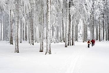Cross-country skier near Hinterzarten, Black Forest, Baden-Wuerttemberg, Germany