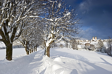 Snow covered trees near St Maergen, Black Forest, Baden-Wuerttemberg, Germany