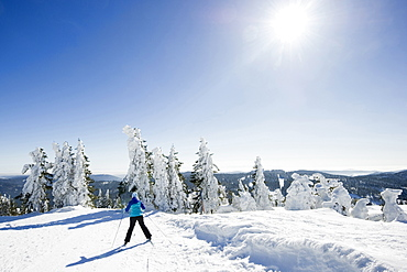 Snow covered fir trees and skier, Feldberg, Black Forest, Baden-Wuerttemberg, Germany
