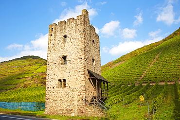 Ruin of a romanesque residential tower, Roman Wohnturm Hofgut Lehmen, Wine district, Ediger-Eller, Mosel, Rhineland-Palatinate, Germany, Europe