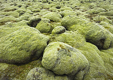 Moss covered stones, Eldhraun lava field, South Iceland, Iceland