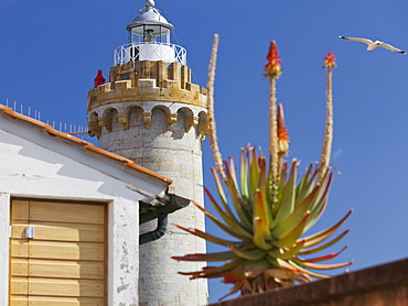 Lighthouse at Fort Stella with a seagull and a palmtree blossom, Portoferraio, Elba Island, Tuscany, Italy