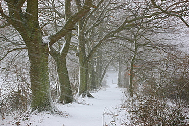 Driving snow near a path in Steffanshagen, Mecklenburg Western Pommerania, Germany