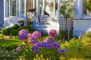 Garden of a villa along the beach promenade, Seaside resort of Binz, Island of Ruegen, Mecklenburg Western Pommerania, Germany