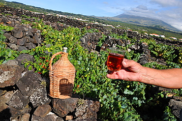 Viniculture at the southwest coast with Pico vulcano in the background, Ponta do Pico, Island of Pico, Azores, Portugal