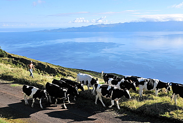 In the highlands with view towards Pico vulcano, Island of Sao Jorge, Azores, Portugal
