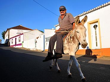 Farmer  on a donkey in Cabo da Praia near Praia da Vitoria, Island of Terceira, Azores, Portugal