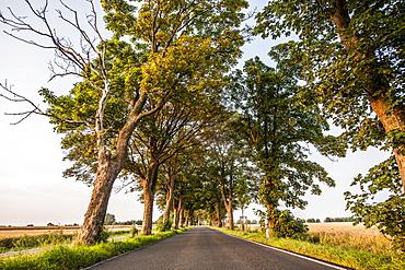 Allee on the Island of Ruegen, Mecklenburg-Western Pomerania, Germany