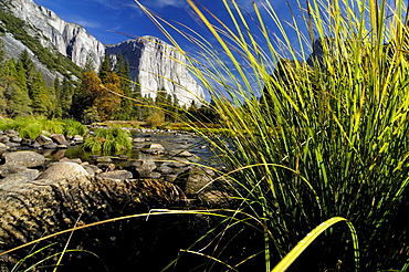 Idyllic landscape with stream in the sunlight, Yosemite National Park, California, North America, America