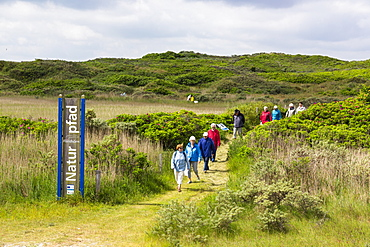 Flinthoern nature trail, Dunes, Langeoog Island, North Sea, National Park, Unesco World Heritage Site, East Frisian Islands, East Frisia, Lower Saxony, Germany, Europe
