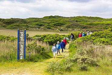 Flinthoern nature trail, Dunes, Langeoog Island, North Sea, National Park, Unesco World Heritage Site, East Frisian Islands, East Frisia, Lower Saxony, Germany, Europe