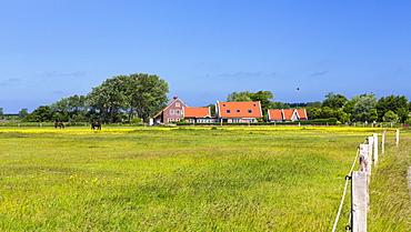 Horses on a paddock on Langeoog Island, North Sea, East Frisian Islands, East Frisia, Lower Saxony, Germany, Europe