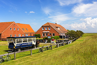 Restaurant Meierei with horse and cart, Langeoog Island, North Sea, East Frisian Islands, East Frisia, Lower Saxony, Germany, Europe