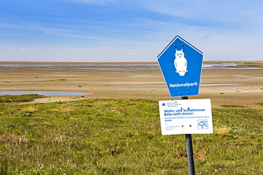 Mudflats at low tide with oystercatchers, Juist Island, Nationalpark, Unesco World Heritage Site, North Sea, East Frisian Islands, East Frisia, Lower Saxony, Germany, Europe