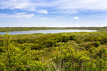 Lake Hammer, Juist Island, Nationalpark, North Sea, East Frisian Islands, East Frisia, Lower Saxony, Germany, Europe
