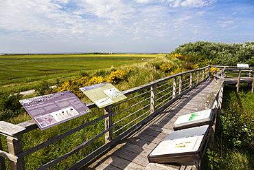 Otto Leege nature trail, Juist Island, Nationalpark, North Sea, East Frisian Islands, East Frisia, Lower Saxony, Germany, Europe