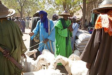 Livestock for sale at Monday Market, Djenne, Mali
