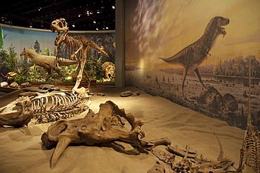 Dinosaur Hall of the Royal Tyrell Museum, Drumheller, Alberta, Canada