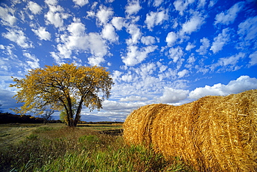 Field and Straw Rolls, St. Adolphe, Manitoba