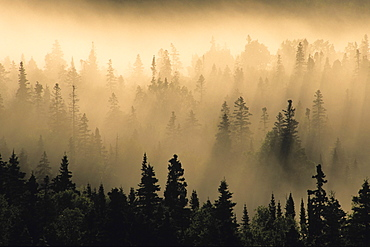 Mist in forest at Sunrise, Pukaskwa National Park, Lake Superior Ontario.