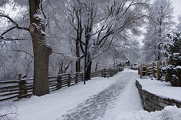 Driveway in Winter, Toronto, Ontario