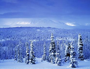 Kluane National Park, Winter, Yukon Territory, Canada