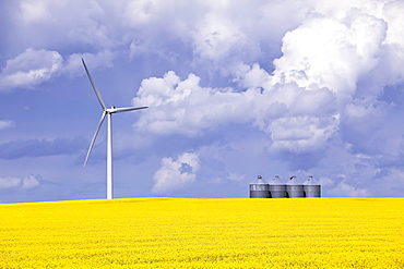 Artist's Choice: Wind turbine and canola field on stormy day, St. Leon, Manitoba