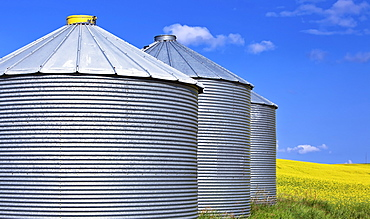 Grain silos, and canola field, Pembina Valley, Manitoba