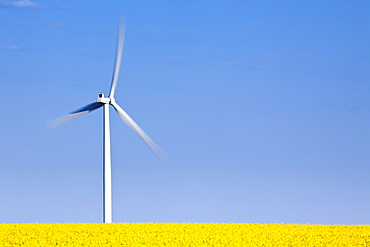 Wind Turbine and Canola Field, St. Leon, Manitoba