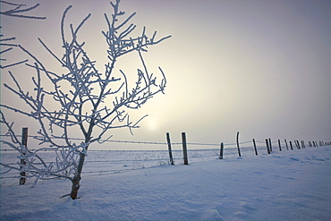Hoar frost covering trees and barbed wire fence on winter morning, central Alberta