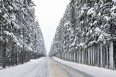 Highway 1a, Banff National Park, Alberta