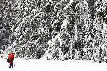 Photographer photographing snow-covered forest at Moose Meadows, Banff National Park, Alberta