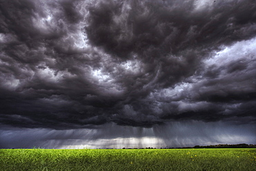Summer storm clouds over an unripened canola field north of Edmonton, Alberta.
