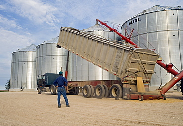 Man looks on as oats are augered into a grain storage bin, near Lorette, Manitoba