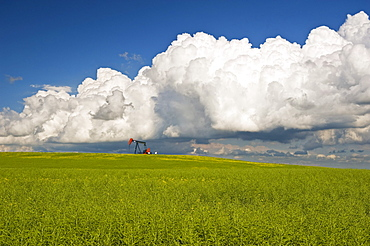 Pod stage canola field with oil pumpjack and cumulonimbus clouds in the background, near Torquay, Saskatchewan