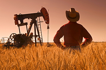 Man looks out over a harvest ready wheat field with an oil pumpjack in the background, near Sinclair, Manitoba