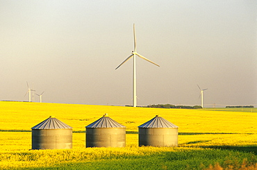 Artist's Choice: Grain Bins and Wind Turbines in Canola Field, near St. Leon, Manitoba