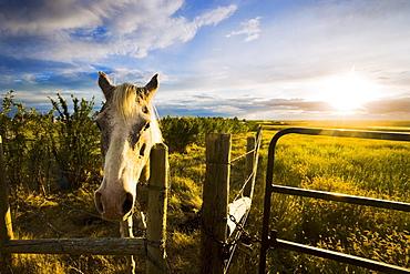 Horse at sunset near Moose Jaw, Saskatchewan