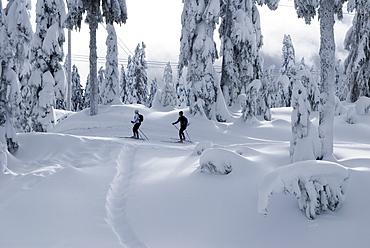 People Skiing on Hollyburn Mountain, Vancouver, British Columbia