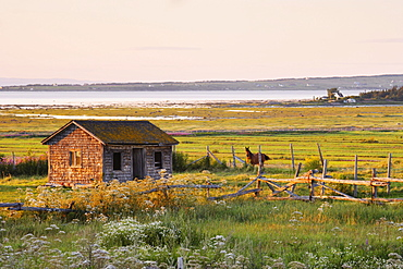 Shed and Horse with St. Lawrence River and Ile Verte in the background, Bas-Saint-Laurent Region, Cacouna, Quebec