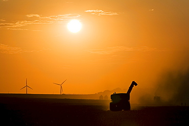 A combine working the fields during the fall harvest at sunset with wind turbines of the St. Leon windfarm in the distance, St. Leon, Manitoba