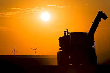 A combine working the fields during the fall harvest at sunset, Wind turbines of the St. Leon windfarm in the distance, St. Leon, Manitoba