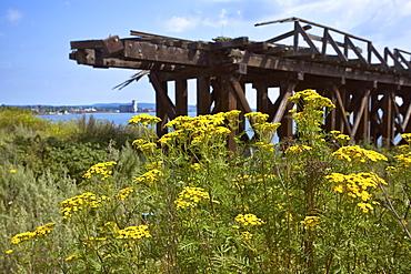 Wildflowers and abandoned bridge on Lake Superior, Thunder Bay, Ontario