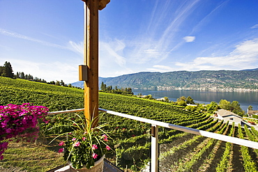 Vineyard and Okanagan lake from Gray Monk Winery, Okanagan Centre, British Columbia
