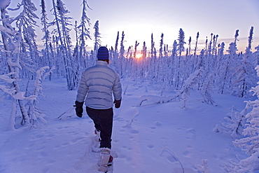 Woman exploring boreal forest on snowshoes, before sunrise, Dempster Highway, Yukon