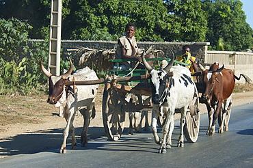 Bullock cart in Toliara, Madagascar